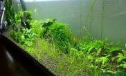 水草造景diy的灯换了管水草缸果然开始冒泡了鱼缸水族箱