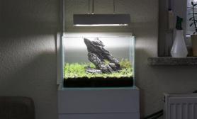 一石成景清新小草缸图片分享
