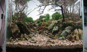 2015 美国AGA水草造景大赛参赛作品《悠然》