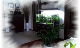 水草缸造景沉木水草泥化妆砂青龙石120CM尺寸设计74