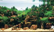 鱼缸造景攻略及注意事项 | 鱼缸造景教程