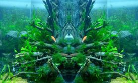 水草造景镜像