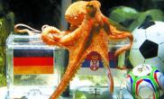"""神奇章鱼""""蒙""""对世界杯三场比赛(多图)"""