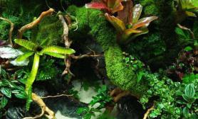 水草造景雨林的季节