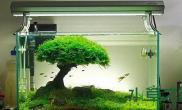 鱼缸造景草缸的终极标准——生态和微生物