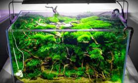 这才是真正的密林水草缸60缸
