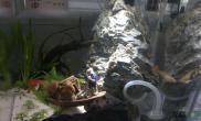 水草造景办公桌小鱼缸
