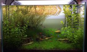 水草造景半个多月没打理就成这样了水草缸哎~鱼缸水族箱鱼缸水族箱