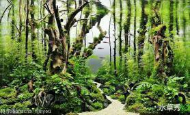 那些年水草缸我们喜欢的树枝枝条造景风格