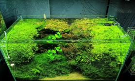 沉木青龙石水草造景90CM尺寸设计28