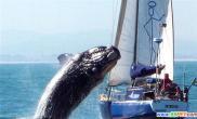 与鲸海上共舞(多图)