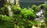 把大自然的山水画做进鱼缸里