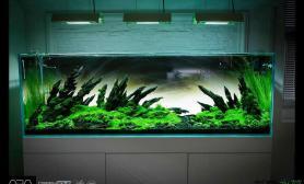 GREEN AQUA工作室 双兄弟超白开缸 怪石嶙峋 挑战视觉极限
