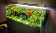 150CM水草造景缸高配置欣赏
