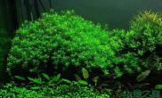 水草造景绿宫廷---开缸神草