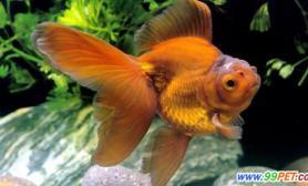鱼儿有奇难杂症问答生姜能帮你搞定(图)