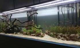 娱乐一下水草缸发发新水水草造景缸