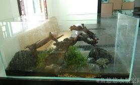 商业造景——川菜馆的水草缸(120CM)
