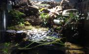水草造景水陆缸重新翻缸造景