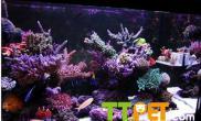 使用珊瑚岩礁水陆生态缸注意问题