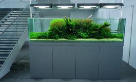 沉木青龙石水草造景2米2000CM及以上尺寸设计