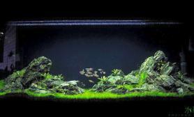 青龙石上水草缸灯鱼群游水草缸极致享受