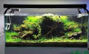 水草造景作品:水草造景(120cm)-99