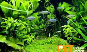 水草对水质有影响吗