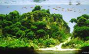 一些被遗忘的佳作欣赏水草造景大赛造景图片