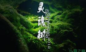 2012ADA造景——灵魂树水草缸我们一起深入他的灵魂世界