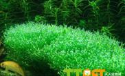 为什么水草会出现停止生长