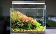 玻璃缸中的大自然91