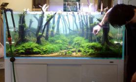 一片神秘的森林水草缸不得不说景深做的很棒