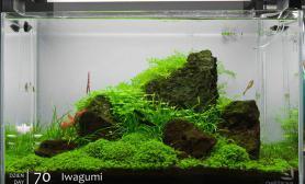 沉木青龙石水草造景60CM尺寸设计24