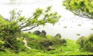 有深度的造景MOSS树青龙石山景