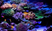 造景的审美利用强迫透视和互补颜色增强造景透视感和突出个性珊瑚的方法
