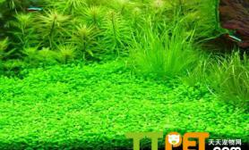藻类对鱼和水质有哪些影响