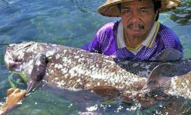 印尼渔民无意钓上石腔棘远古鱼(图)