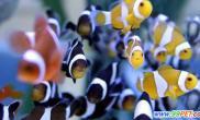 三千余尾台湾高端观赏鱼将抵厦门(图)