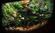 雨林生态造景水草缸敞口水陆缸