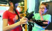 龙年养龙虾当宠物(图)