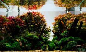 水族箱造景造景之路:水草造景(60CM)