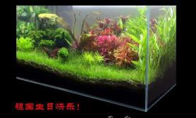水草造景花团锦簇迎接国庆