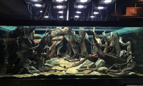 水族箱造景猪猪王超新作:3mx3mx1图片2m水草缸十吨水水草缸四面水草缸造景