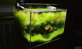 水草造景45小缸