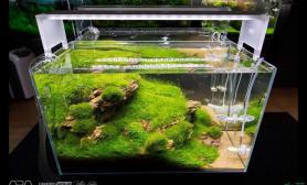 双缸合一的造景水草缸这水平绝非一般人能达到的