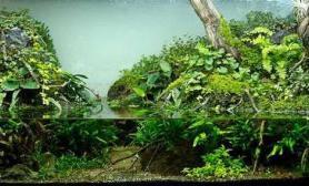 2011年AGA第一名水陆缸
