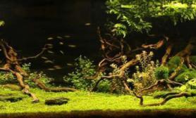 分享个美景水草缸大家一起欣赏一下