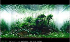 水草缸造景沉木水草泥化妆砂青龙石60CM尺寸设计33