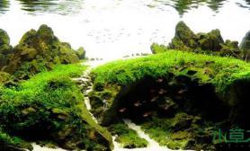 水草造景水草缸图片